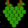 Lozni kalemovi i sadnice vinove loze